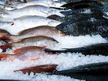 Рыбы, который замерли во льду, красном люциане, croaker и рыбах тилапии в холодильных установках стоковые фотографии rf