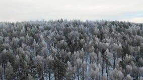 Ровная воздушная голова над трутнем зимы кинематографическим снятым норвежской камеры летания леса акции видеоматериалы