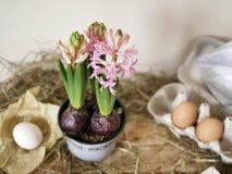 Розовые гиацинты в цветочном горшке, яйцах и яйцах триперсток, рамках, сене на светлом деревянном столе, весеннем сезоне, пасхе стоковое изображение