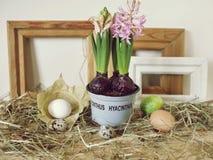 Розовые гиацинты в цветочном горшке, яйцах и яйцах триперсток, рамках, сене на светлом деревянном столе, весеннем сезоне, пасхе стоковые фотографии rf