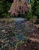 Розовые лепестки цветка в пруде стоковое изображение rf