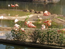 Розовый фламинго в зоопарке stock image
