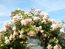 Романтичный взгляд через ворота цветка к противоположному берегу озера на озере zurich в Швейцарии стоковые изображения