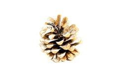 Рine cones Royalty Free Stock Images