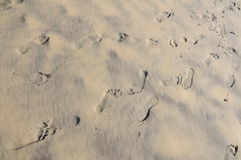 Тracks in the sand Royalty Free Stock Photo