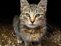 Тrusting eyes. Pets Stock Image