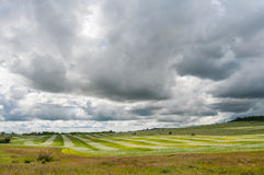  Ñ urrently, аграрное поле Стоковое фото RF