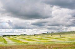  Ñ urrently, аграрное поле стоковые изображения