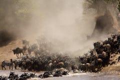 Ñus y cebras que emigran a través de Mara River foto de archivo libre de regalías