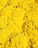 Żółci chryzantema kwiaty Zdjęcia Royalty Free