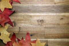 Żółci czerwoni jesień liście na tle Obraz Stock