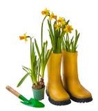Żółci daffodils i gumowi buty odizolowywający Obraz Royalty Free