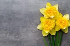 Żółci daffodils na popielatym tle dostępny karciany Easter eps kartoteki powitanie Obraz Royalty Free