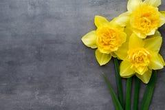 Żółci daffodils na popielatym tle dostępny karciany Easter eps kartoteki powitanie Zdjęcia Stock