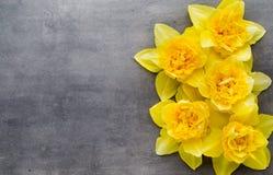Żółci daffodils na popielatym tle dostępny karciany Easter eps kartoteki powitanie Obrazy Stock