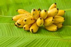 Żółci dama palca banany stawiający na zielonym bananowym liściu, kluay-khai, Fotografia Stock
