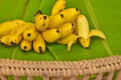 Żółci dama palca banany stawiający na zielonym bananowym liściu, kluay-khai, Pisang Mas Fotografia Royalty Free