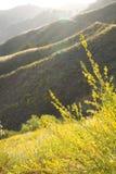Żółci góra kwiaty Zdjęcie Royalty Free