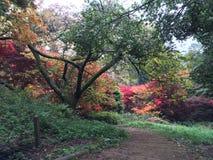 Żółci i czerwoni drzewa Zdjęcia Stock