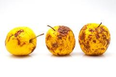 Żółci jabłka Zdjęcie Royalty Free
