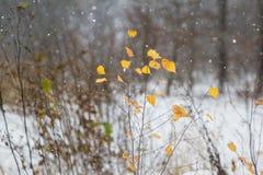 Żółci jesień liście w ciężkim opadzie śniegu obrazy stock