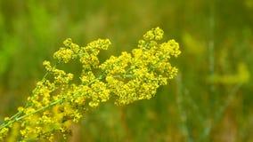 Żółci kwitnący wildflowers zbiory wideo