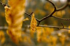 Żółci liście fotografia royalty free