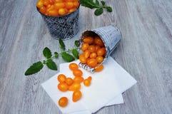 Żółci pomidory Zdjęcia Stock