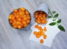 Żółci pomidory Obraz Royalty Free