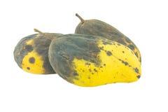 Żółci przegnili mango odizolowywający Zdjęcie Royalty Free