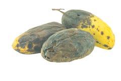 Żółci przegnili mango odizolowywający Zdjęcia Royalty Free