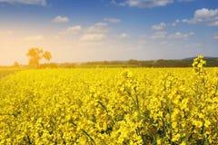 Żółci rapeseed pola w wiosna sezonie Zdjęcie Stock