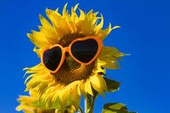 Żółci słoneczniki z Kierowymi okularami przeciwsłonecznymi Zdjęcia Stock