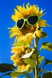 Żółci słoneczniki z Kierowymi okularami przeciwsłonecznymi Obraz Royalty Free