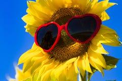 Żółci słoneczniki z Kierowymi okularami przeciwsłonecznymi Zdjęcie Stock