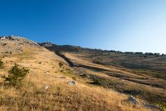 Żółci traw pola w słońcu przy wierzchołkiem Marsicano góra Zdjęcia Stock