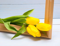 Żółci tulipany obraz stock
