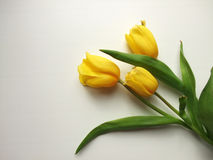 Żółci tulipany Fotografia Stock