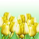 Żółci tulipany Businessmans pracuje w biurze Obrazy Royalty Free