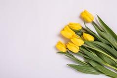 Żółci tulipany wewnątrz na białym tle Romantyczna kwitnienie karta dla ` s, Macierzystego ` s lub kobiety ` s urodziny, rocznicy, Zdjęcia Stock