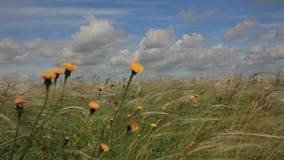 Żółci wildflowers zdjęcie wideo