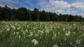 Żółci wildflowers zbiory