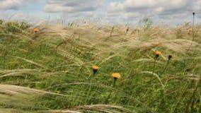 Żółci wildflowers zbiory wideo