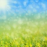 Żółta łąka Obraz Royalty Free