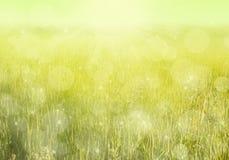 Żółta łąka Zdjęcia Royalty Free