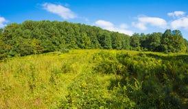 Żółta łąka Fotografia Stock