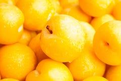Żółta śliwka Zdjęcia Royalty Free
