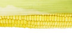 Żółta świeża kukurudza na bielu obrazy royalty free