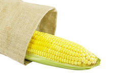 Żółta świeża kukurudza odizolowywająca na białym tle Fotografia Stock
