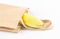 Żółta świeża kukurudza odizolowywająca na białym tle Zdjęcia Stock